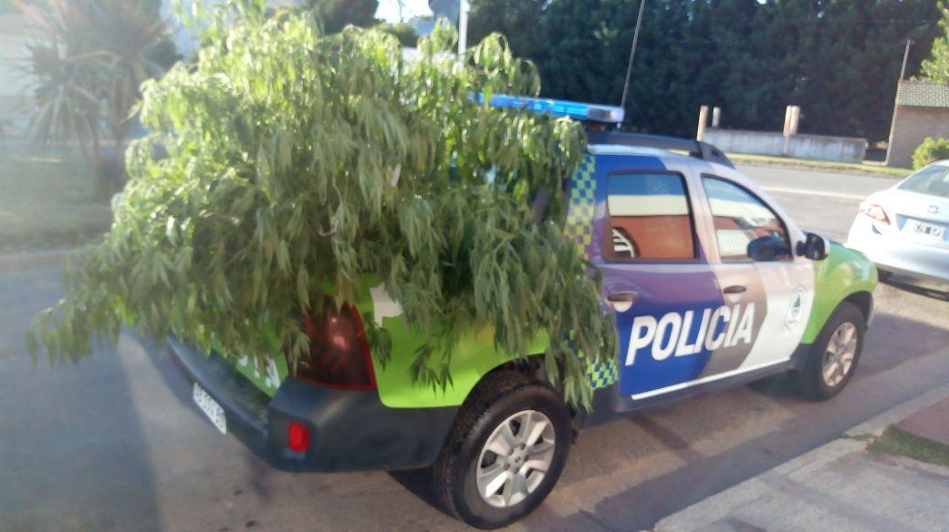 Marihuana secuestrada