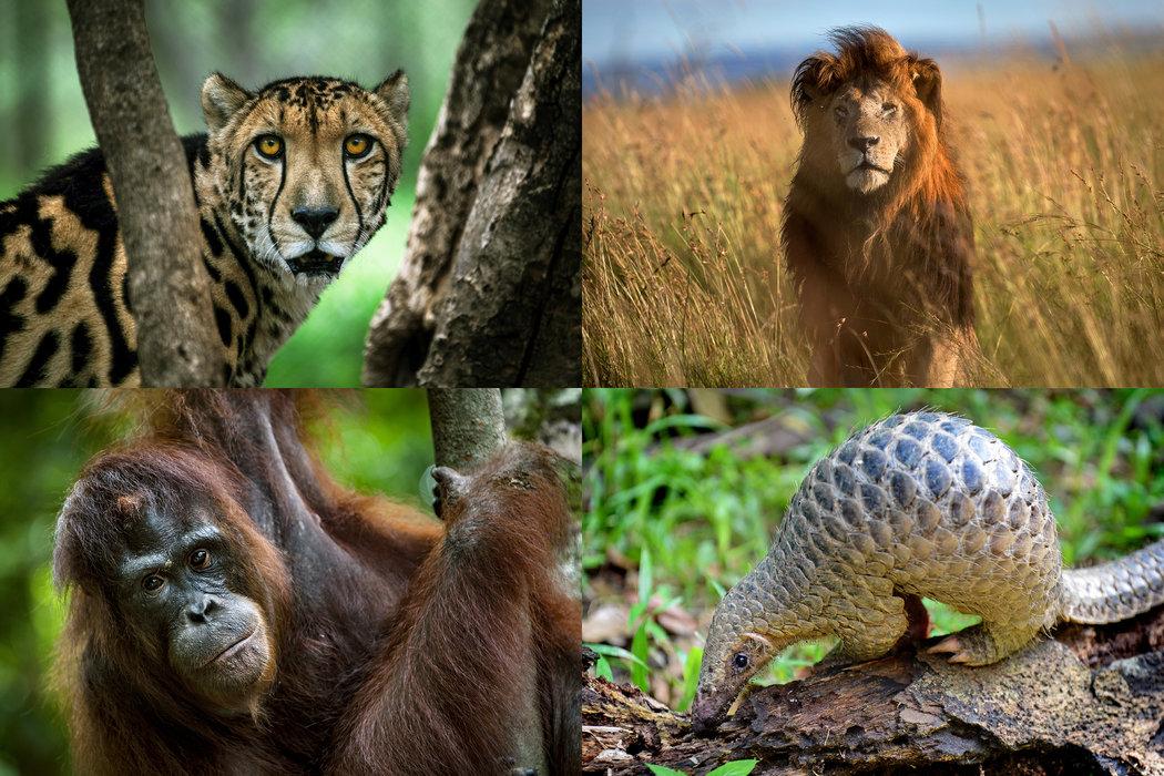 Extinción de especies - La Verdad Online de Junín, Buenos
