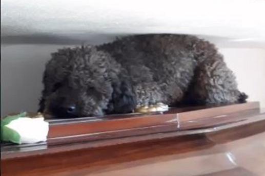 Villaguay: el perro visita a su dueña en el cementerio
